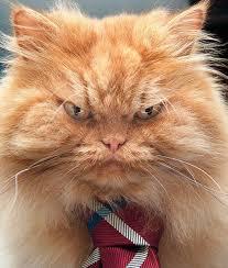 Mad Kitty Meme - grumpier than grumpy cat mnn mother nature network