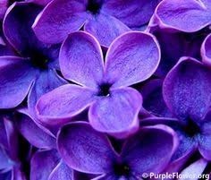 Colors Of Purple Aiken House U0026 Gardens The Color Purple Flower Power Pinterest