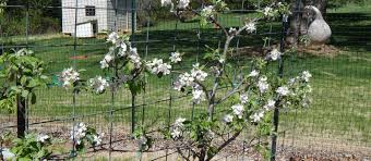 part 4 six steps to planting a successful fruit garden abundant