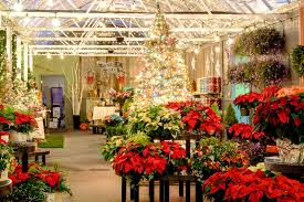 christmas trees and decor at frey u0027s greenhouse in lancaster pa