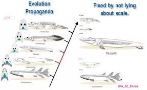 evolution for dummies u2013 flat out unconstitutional