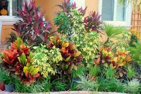 Florida Landscaping Ideas For Front Of House by Croton Tropical Plants Landscaping Landscaping And Outdoor