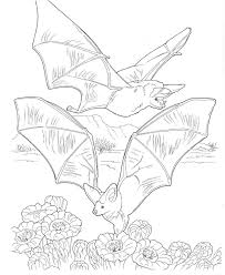 animal habitat colouring pages habitats colouring pages animals