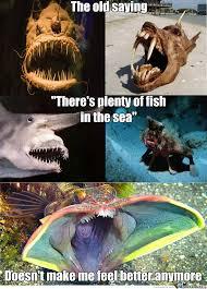 Fish In The Sea Meme - plenty of fish in the sea shark meme ug99
