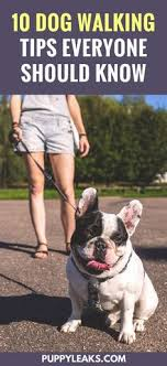 Thinking about starting your own dog walking business