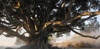 the tree onya magazine