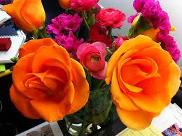 cocotribeca the most amazing orange roses