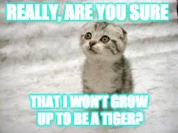 Sad Cat Memes - sad cat memes imgflip