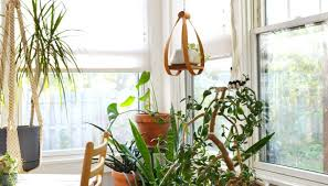 home interior plants awesome big indoor plants pictures interior design ideas