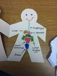 43 best homeschool digestive system images on pinterest