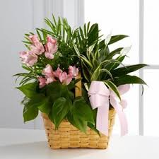 gift arrangements sympathy gift arrangements lofendo flowers