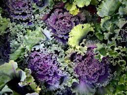 ornamental cabbage rustic chic