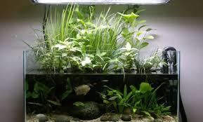 Aquascape Lighting 4 Benefits Of Plants In The Aquascape Aquascaper