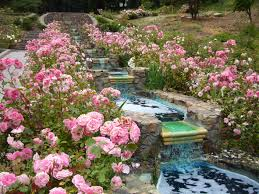 diy water plants ponds home garden design inspiration loversiq