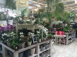 indoor plant display indoor plant displays indoor plants modern design unforgettable