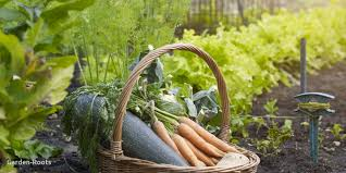 easy vegetables to grow at home uk lovely this genius cheat sheet