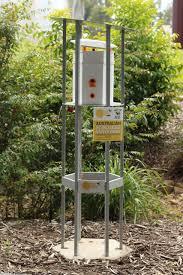 coast honey company u0027s backyard bee hive dream sunshine coast daily