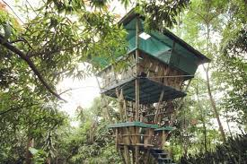 Treehouse Fostering Agency - fundraiser by jo scheer tropical treehouse reconstruction