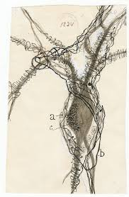 at the intersection of art and science drawings by santiago ramón