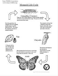 30 best insects images on pinterest teaching science