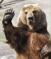 Funny Bear Memes - pin by anita jann on bears pinterest