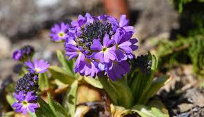 free images nature blossom purple botany garden flora