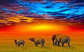 homepage new wallpapers top rated submit wallpaper 438 elephant hd wallpapers backgrounds wallpaper abyss