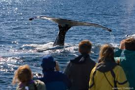 whale watching on cape cod is the best massachusetts pastime
