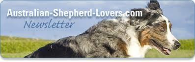 australian shepherd lovers australian shepherd lovers newsletter exclusive preview
