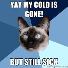 Benson Meme - thursday 11 june 2015 meme images 皓 chronic illness cat