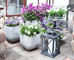 balkon grã npflanzen balkonpflanzen bis zu 70 rabatt westwing