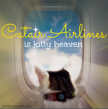 traveling with cats images Flying with cats air travel tips jpg