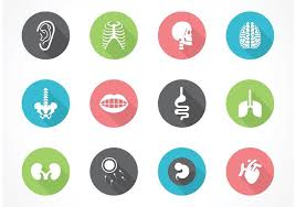 Human Anatomy Images Free Download Free Vector Human Anatomy Icon Set Download Free Vector Art