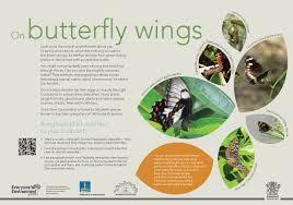 butterfly mount gravatt environment group