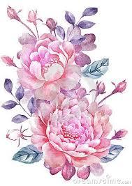 Peony Flowers by Best 25 Peony Drawing Ideas On Pinterest Peony Peony