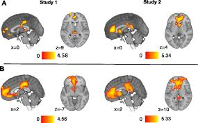 Brain Mapping Neuro Imaging Used To Predict Which Stories Go Viral Behind The