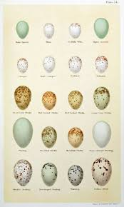 92 best eggs u0026 nests images on pinterest bird nests eggs and