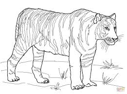 bengal tiger coloring page free printable coloring pages