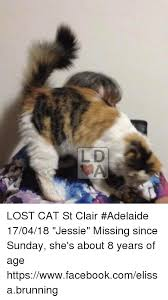 Lost Cat Meme - ld lost cat st clair adelaide 170418 jessie missing since sunday