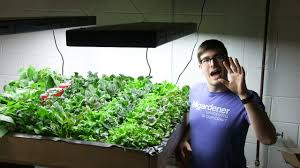 growing salad greens indoors is financially sustainable youtube