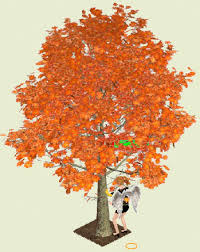 the magickal properties of maple pagans witches amino