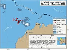 Alaska travel tracker images Virtual wildlife viewing tracking maps bowhead whales alaska jpg