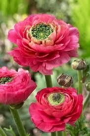 Flower Love Pics - 3884 best flower love images on pinterest flowers plants and