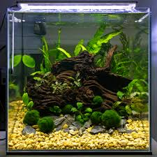 Aquascape Malaysia 1ft Cube Jungle Scape The Planted Tank Forum