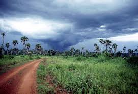 Tropical Savanna Dominant Plants - 9 k characteristics of the earth u0027s terrestrial biomes
