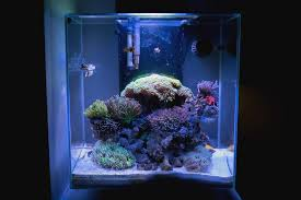fluval edge marine light amazon com 18 watt ultrabrite reef led system for fluval edge