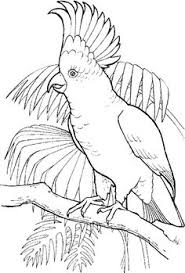 birds book coloring pages animal coloring pages kids