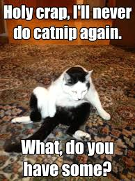 holy crap i ll never do catnip again what do you have some