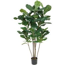 Fiddle Leaf Fig Tree Care by Silk Fiddle Leaf Fig Trees Silk Fiddle Leaf Fig Floor Plants