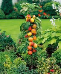 ornamental fruit trees practical edible landscaping ideas